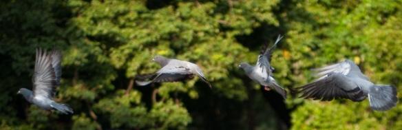 Flight of thephoenix