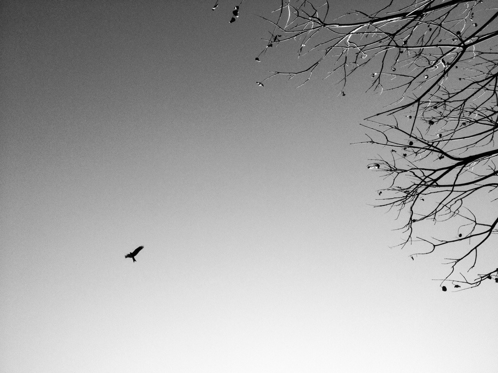 The bird and thesky