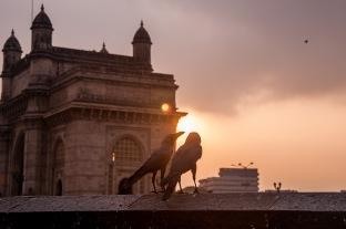 Birds gossipping at the gateway of India, Mumbai