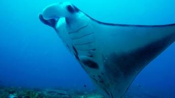 Close encounters with a Manta Ray - Nusa Penida, Bali, Indonesia