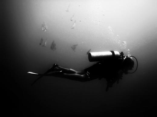Stalked by Batfishes - Mahabalipuram, India