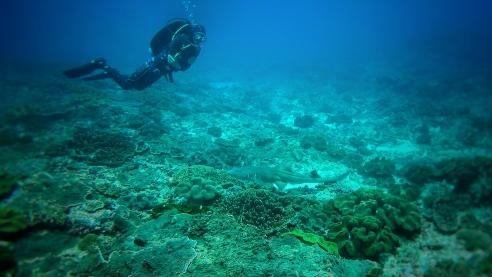 Dive instructor Fredrick with a Nurse shark - Nusa Penida, Bali, Indonesia